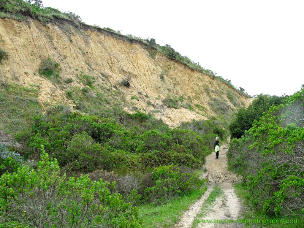 Land slide, El Nino 1998, Drakes Estero Trail